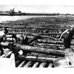 Сплав леса по Припяти, 1950-1960 г.г., река Припять в Петрикове, фото предоставил Петр Галота, (5retro)