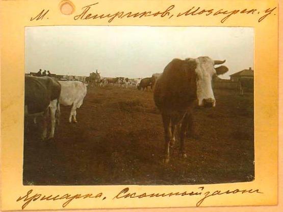 скотный загон - ярмарка Петриков